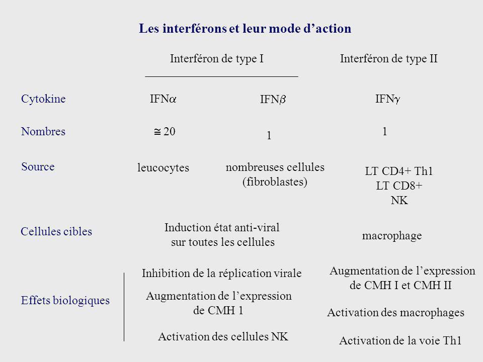 Les interférons et leur mode daction Interféron de type IInterféron de type II Cytokine Source IFN leucocytes IFN nombreuses cellules (fibroblastes) N