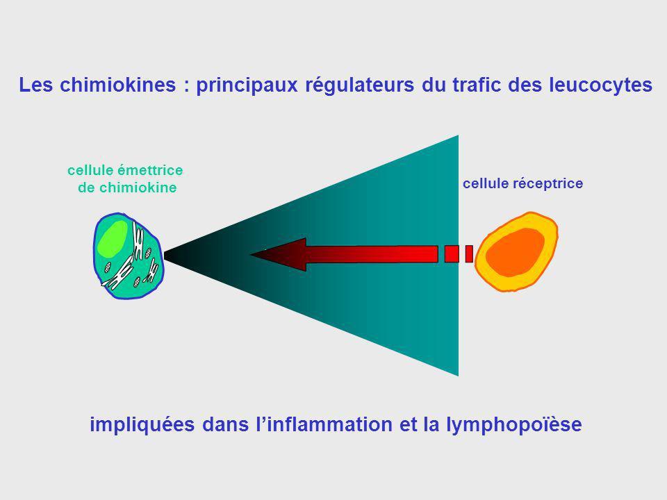4 familles distinctes de chimiokines (20 à 45% d homologie) CCR CC chimiokines (CCL) (chimiokines ) (MIP, RANTES..) Récepteur CXC chimiokines (CXCL) (chimiokines ) (SDF-1, IL-8) CXCR CX3C chimiokines (CX3CL) (chimiokines ) (fractalkine) CX3CR C chimiokines (CL) (chimiokines ) (lymphotactine) XCR ~ 50 chimiokines différentes, ~ 20 récepteurs différents Source variée, pas uniquement les cellules du SI petite taille (90 à 130 aa) 4 résidus cystéines conservés -> classification en fonction des résidus en région N-terminale Les chimiokines