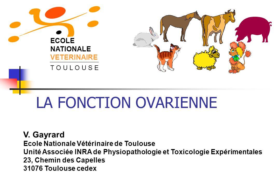 LA FONCTION OVARIENNE V. Gayrard Ecole Nationale Vétérinaire de Toulouse Unité Associée INRA de Physiopathologie et Toxicologie Expérimentales 23, Che
