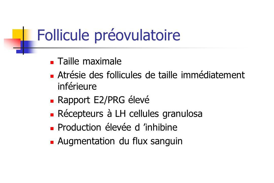 Follicule préovulatoire Taille maximale Atrésie des follicules de taille immédiatement inférieure Rapport E2/PRG élevé Récepteurs à LH cellules granul