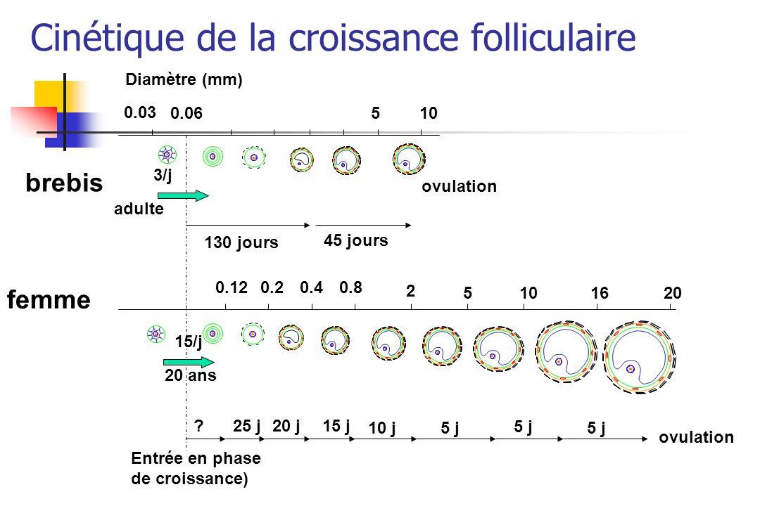 0.03 0.06 brebis 3/j 130 jours 45 jours adulte Diamètre (mm) 0.120.20.40.8 15/j 20 ans Entrée en phase de croissance) femme 2 5101620 ovulation 25 j?2