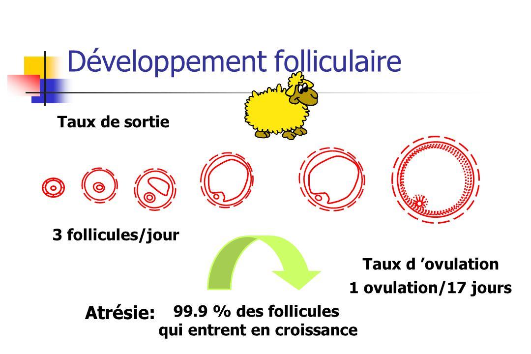 Développement folliculaire Taux de sortie 3 follicules/jour Taux d ovulation 1 ovulation/17 jours 99.9 % des follicules qui entrent en croissance Atré