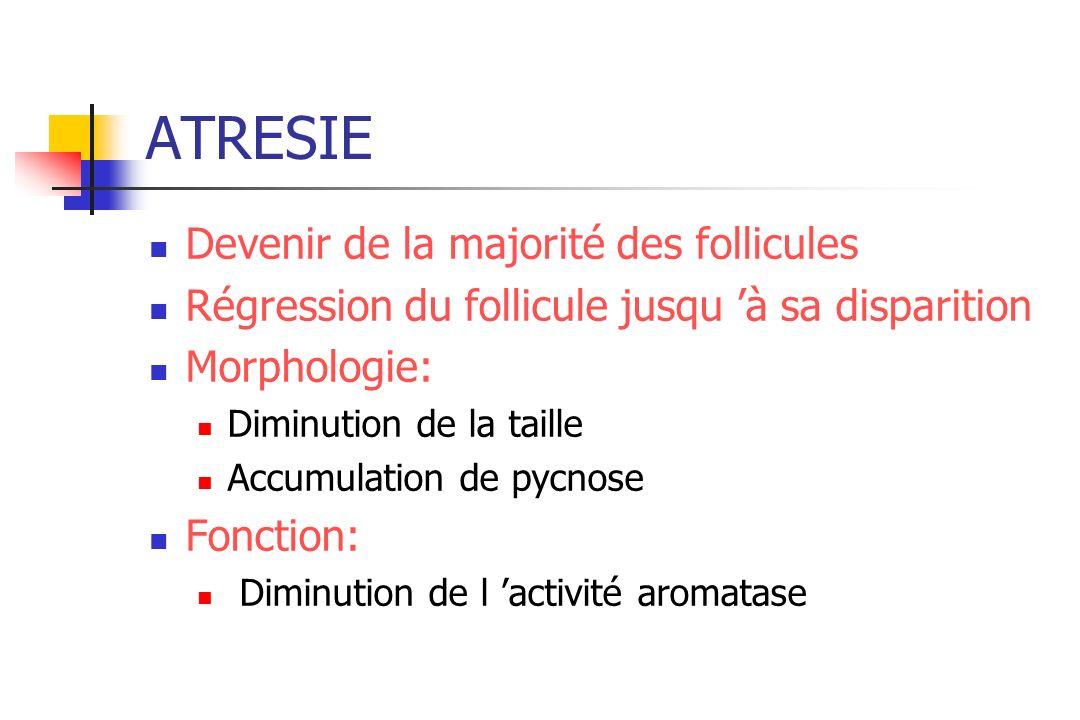 ATRESIE Devenir de la majorité des follicules Régression du follicule jusqu à sa disparition Morphologie: Diminution de la taille Accumulation de pycn