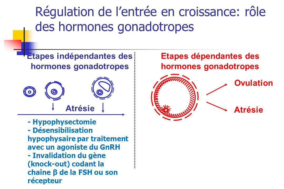 Atrésie Ovulation Atrésie Etapes indépendantes des hormones gonadotropes Etapes dépendantes des hormones gonadotropes - Hypophysectomie - Désensibilis