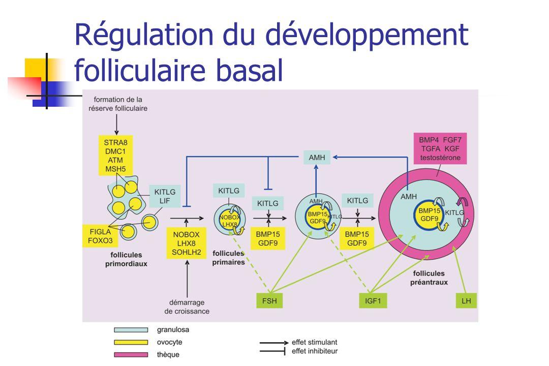 Régulation du développement folliculaire basal