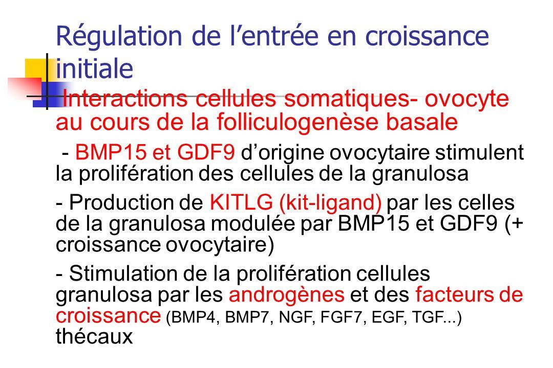 Régulation de lentrée en croissance initiale Interactions cellules somatiques- ovocyte au cours de la folliculogenèse basale - BMP15 et GDF9 dorigine