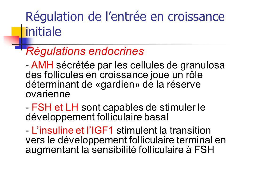 Régulation de lentrée en croissance initiale Régulations endocrines - AMH sécrétée par les cellules de granulosa des follicules en croissance joue un