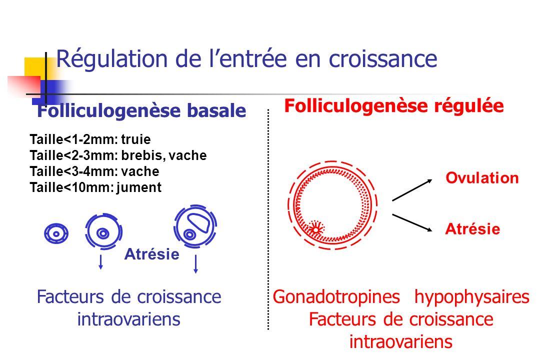 Atrésie Ovulation Atrésie Facteurs de croissance intraovariens Gonadotropines hypophysaires Facteurs de croissance intraovariens Folliculogenèse basal