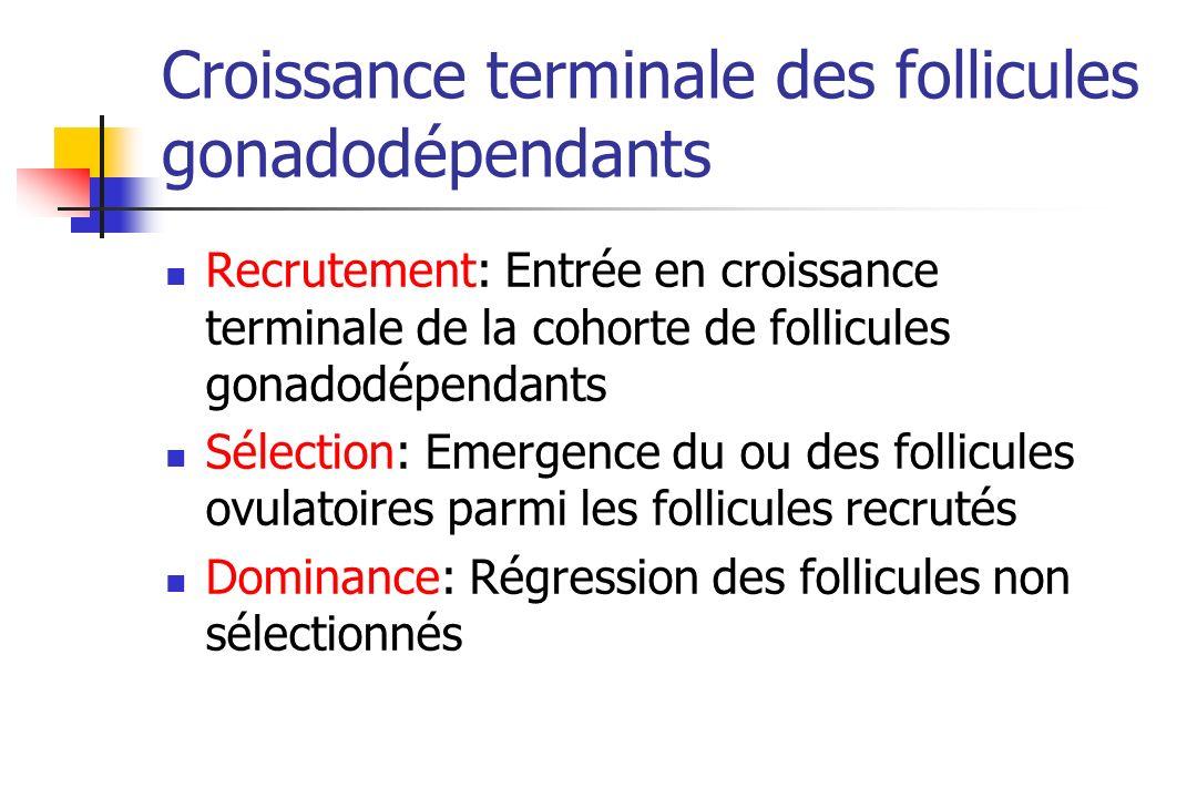Croissance terminale des follicules gonadodépendants Recrutement: Entrée en croissance terminale de la cohorte de follicules gonadodépendants Sélectio