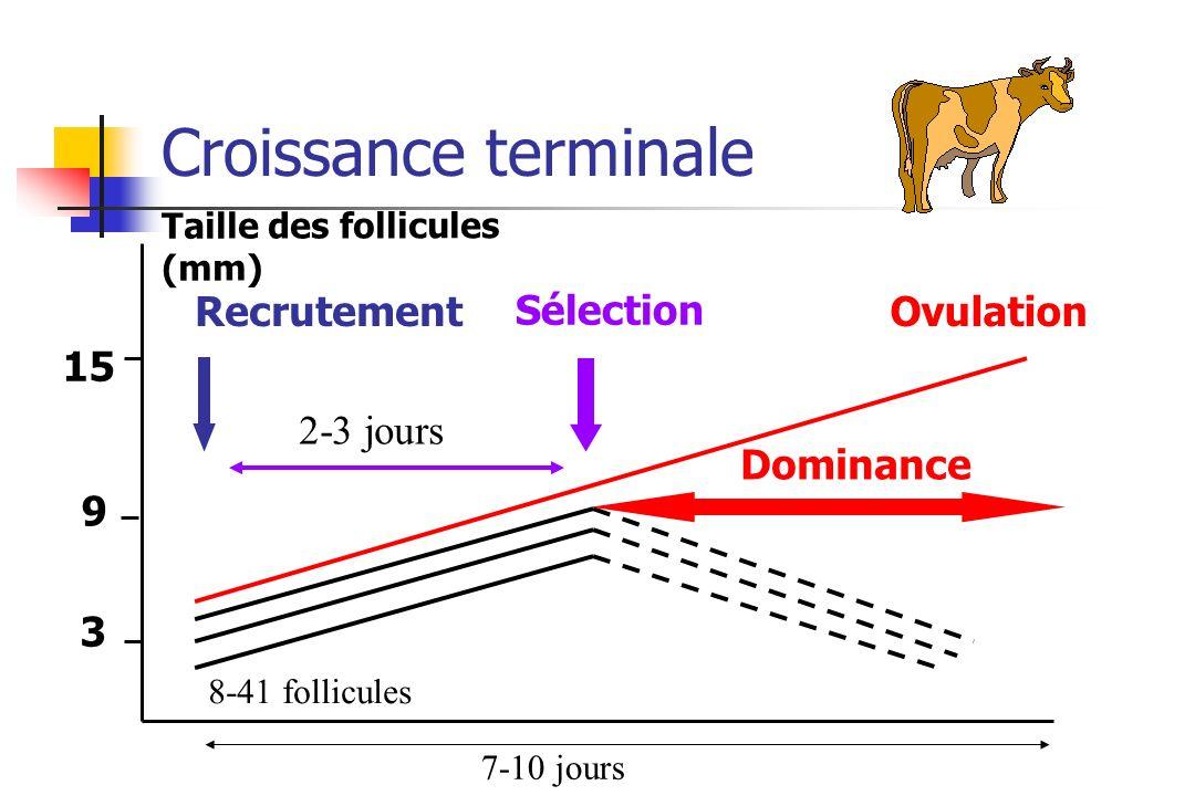 Croissance terminale Taille des follicules (mm) OvulationRecrutement Sélection Dominance 15 3 8-41 follicules 2-3 jours 9 7-10 jours