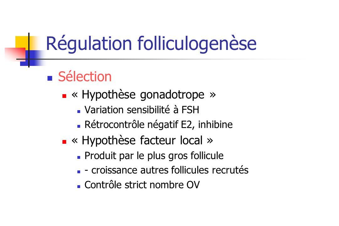 Régulation folliculogenèse Sélection « Hypothèse gonadotrope » Variation sensibilité à FSH Rétrocontrôle négatif E2, inhibine « Hypothèse facteur loca