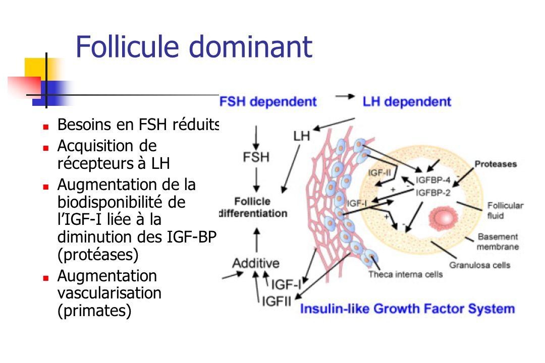 Follicule dominant Besoins en FSH réduits Acquisition de récepteurs à LH Augmentation de la biodisponibilité de lIGF-I liée à la diminution des IGF-BP