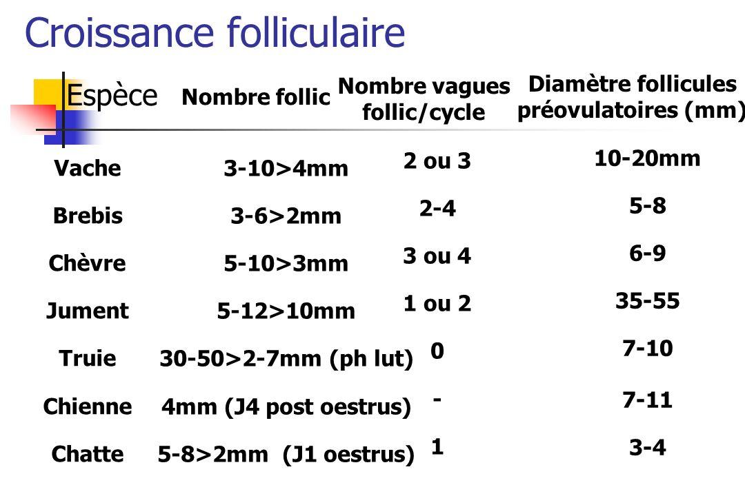 Espèce Nombre vagues follic/cycle Diamètre follicules préovulatoires (mm) Vache Brebis Chèvre Jument Truie Chienne Chatte 2 ou 3 2-4 3 ou 4 1 ou 2 0 -