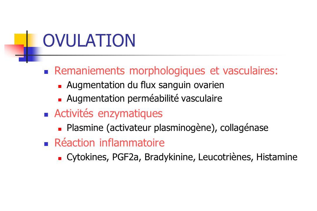 OVULATION Remaniements morphologiques et vasculaires: Augmentation du flux sanguin ovarien Augmentation perméabilité vasculaire Activités enzymatiques