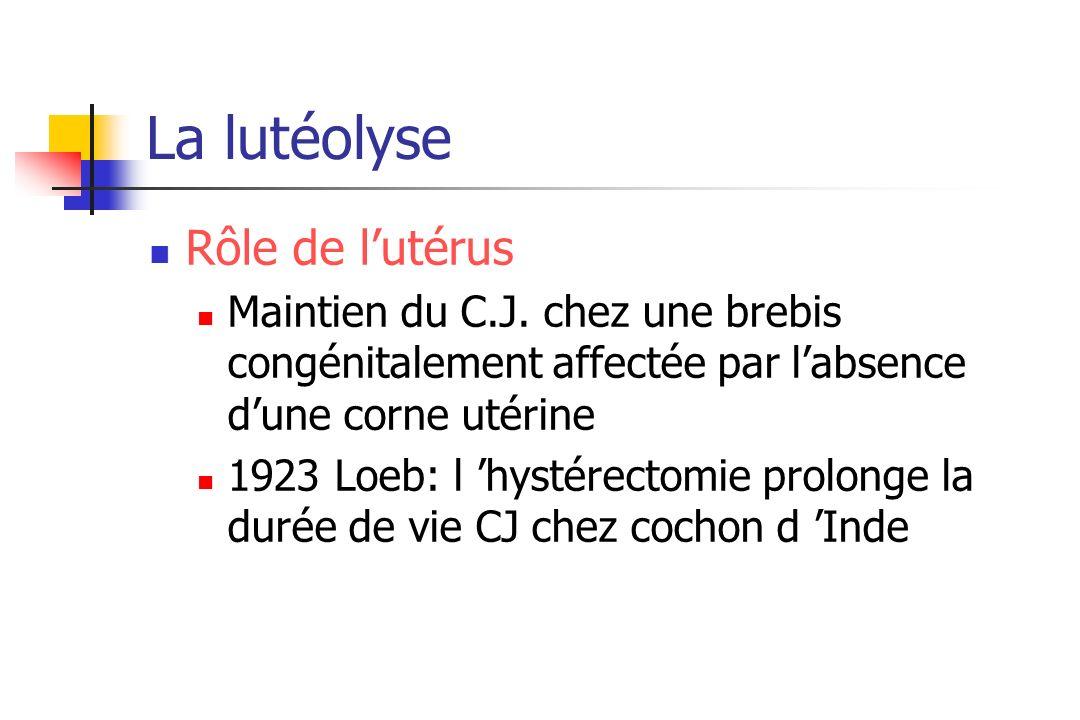 La lutéolyse Rôle de lutérus Maintien du C.J. chez une brebis congénitalement affectée par labsence dune corne utérine 1923 Loeb: l hystérectomie prol