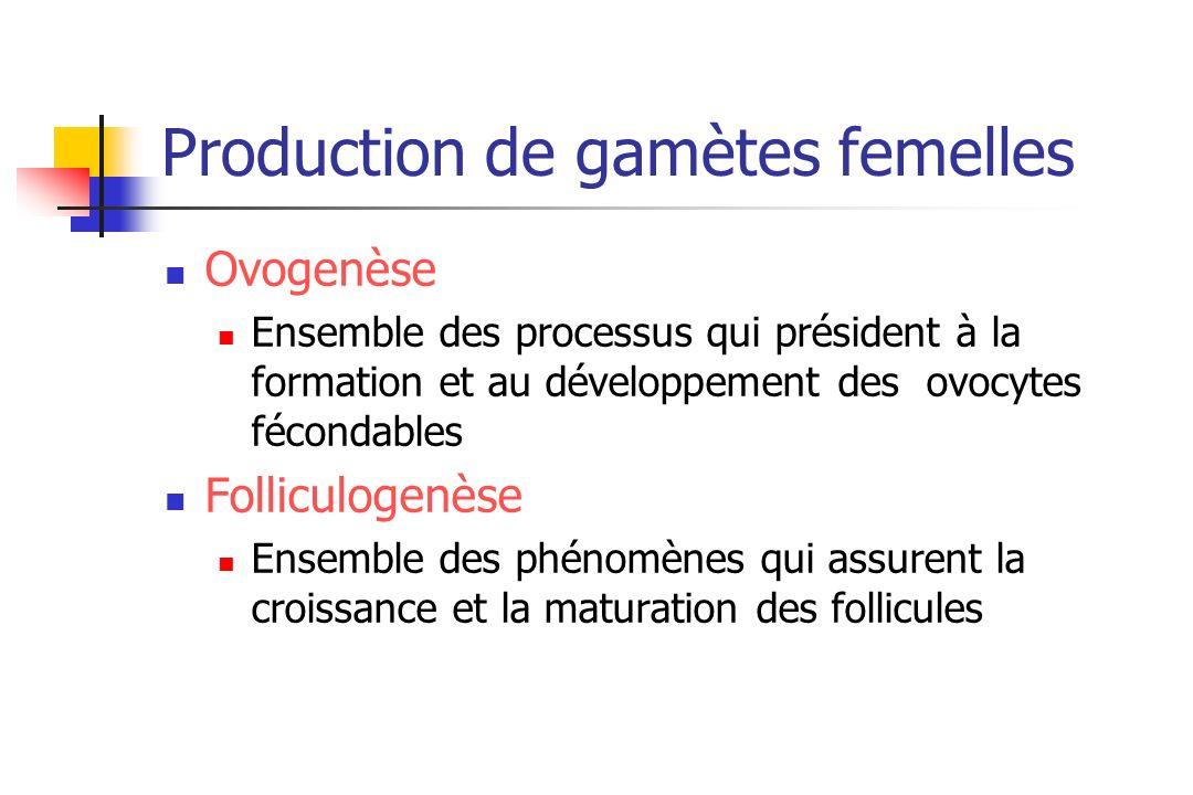 Production de gamètes femelles Ovogenèse Ensemble des processus qui président à la formation et au développement des ovocytes fécondables Folliculogen