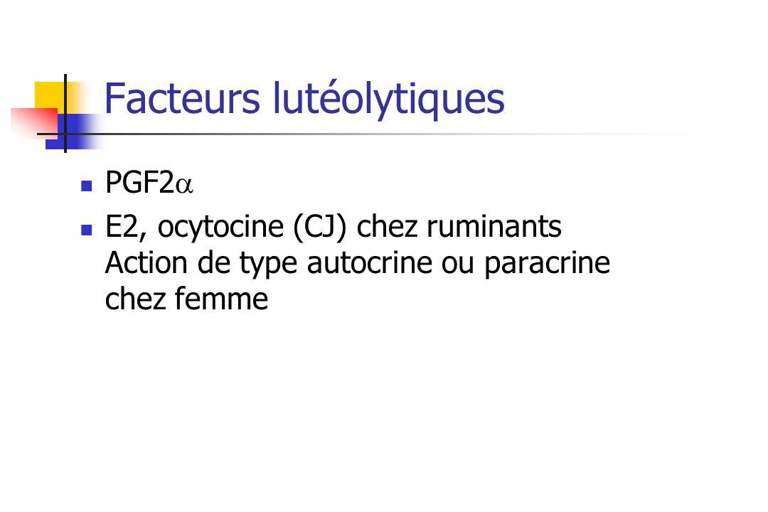 Facteurs lutéolytiques PGF2 E2, ocytocine (CJ) chez ruminants Action de type autocrine ou paracrine chez femme