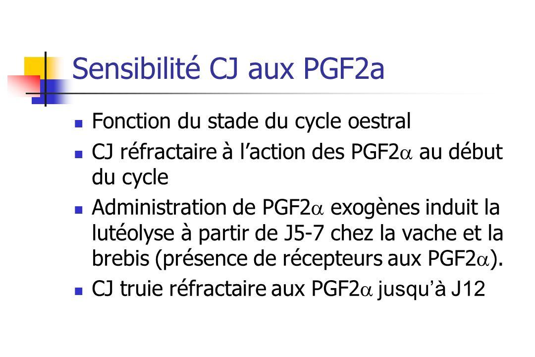 Sensibilité CJ aux PGF2a Fonction du stade du cycle oestral CJ réfractaire à laction des PGF2 au début du cycle Administration de PGF2 exogènes induit