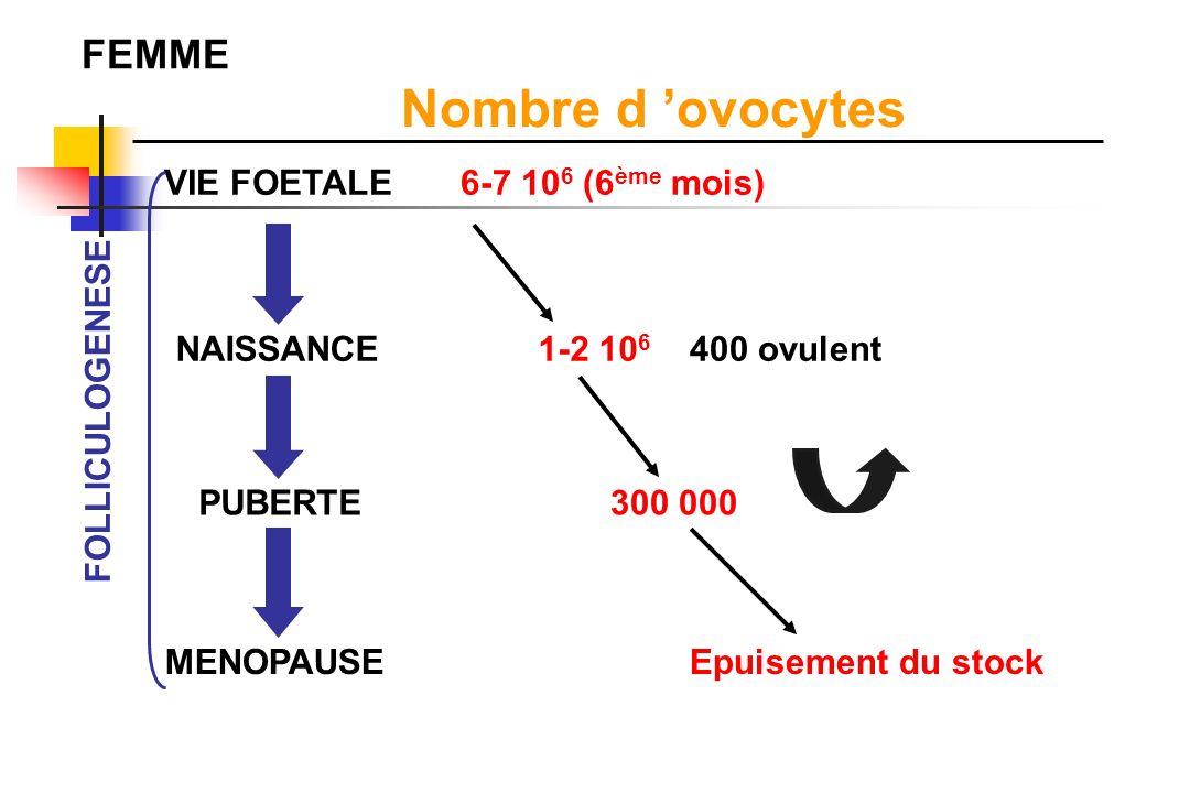 VIE FOETALE NAISSANCE 14 ans Nombre d ovocytes 2 10 6 (5 ème mois) 133 000 2500 FOLLICULOGENESE 4 ans