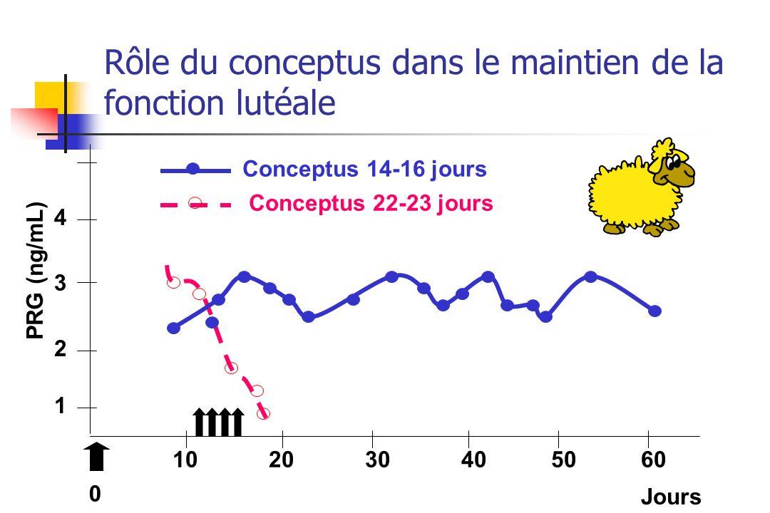1 2 3 4 102030405060 Conceptus 14-16 jours Conceptus 22-23 jours PRG (ng/mL) 0 Jours Rôle du conceptus dans le maintien de la fonction lutéale