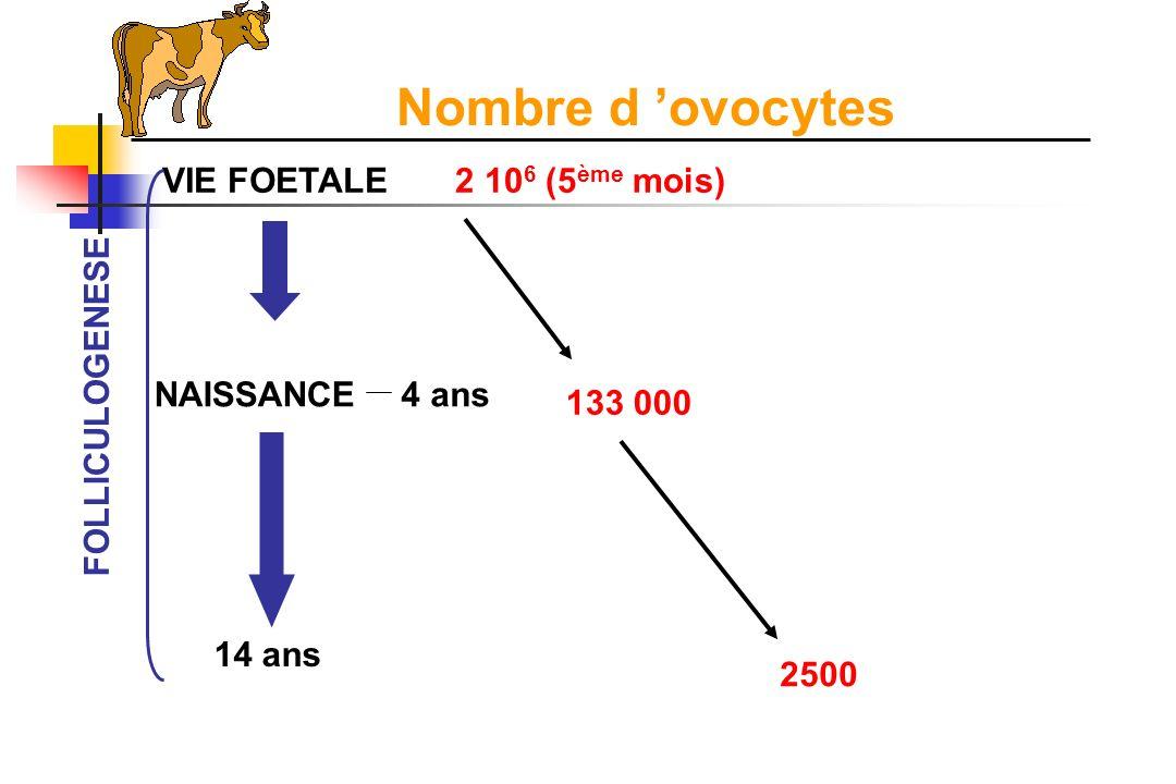La fonction ovarienne I.