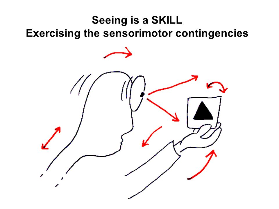 Seeing is a SKILL Exercising the sensorimotor contingencies