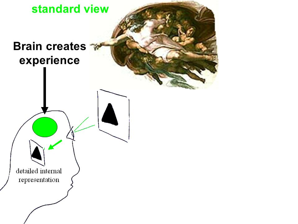 Brain creates experience standard view
