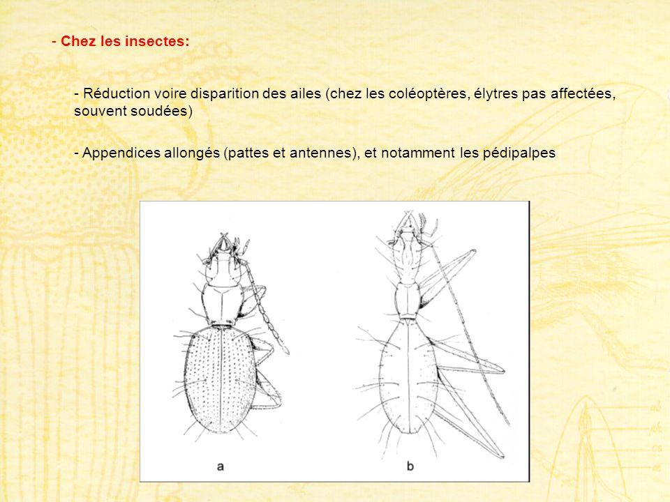 - Chez les insectes: - Réduction voire disparition des ailes (chez les coléoptères, élytres pas affectées, souvent soudées) - Appendices allongés (pat