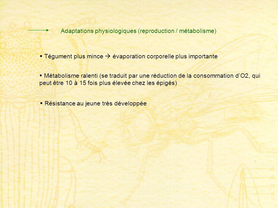 Adaptations physiologiques (reproduction / métabolisme) Métabolisme ralenti (se traduit par une réduction de la consommation dO2, qui peut être 10 à 1