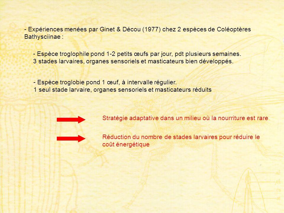 - Expériences menées par Ginet & Décou (1977) chez 2 espèces de Coléoptères Bathysciinae : - Espèce troglophile pond 1-2 petits œufs par jour, pdt plu