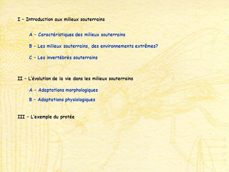 I – Introduction aux milieux souterrains A – Caractéristiques des milieux souterrains B – Les milieux souterrains, des environnements extrêmes? C – Le