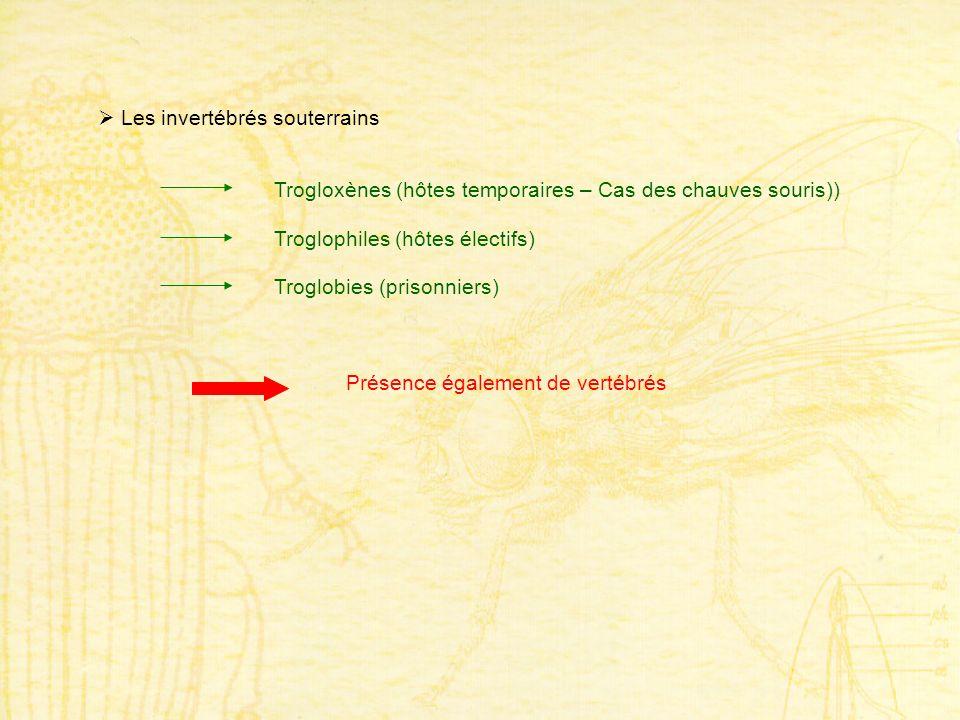 Les invertébrés souterrains Trogloxènes (hôtes temporaires – Cas des chauves souris)) Troglophiles (hôtes électifs) Troglobies (prisonniers) Présence