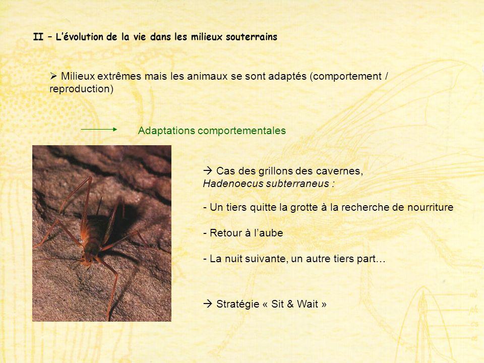 II – Lévolution de la vie dans les milieux souterrains Milieux extrêmes mais les animaux se sont adaptés (comportement / reproduction) Adaptations com