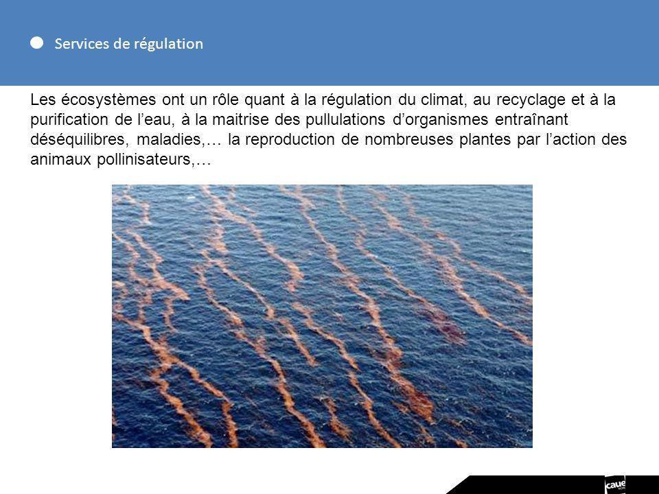 Services de régulation Les écosystèmes ont un rôle quant à la régulation du climat, au recyclage et à la purification de leau, à la maitrise des pullu