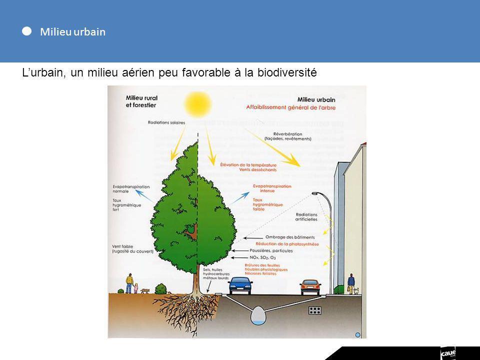 Milieu urbain Lurbain, un milieu aérien peu favorable à la biodiversité