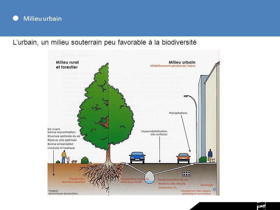 Milieu urbain Lurbain, un milieu souterrain peu favorable à la biodiversité