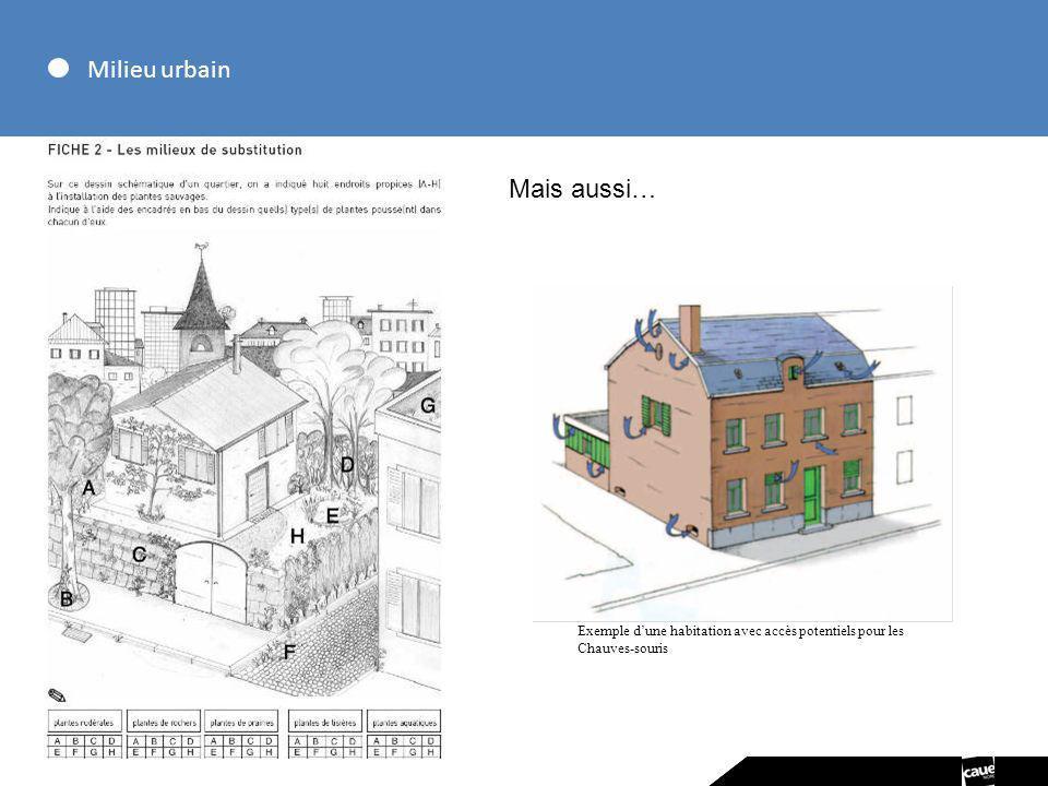 Milieu urbain Mais aussi… Exemple dune habitation avec accès potentiels pour les Chauves-souris