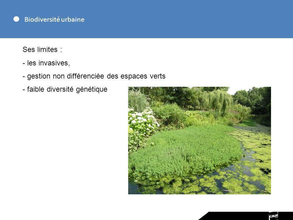 Biodiversité urbaine Ses limites : - les invasives, - gestion non différenciée des espaces verts - faible diversité génétique