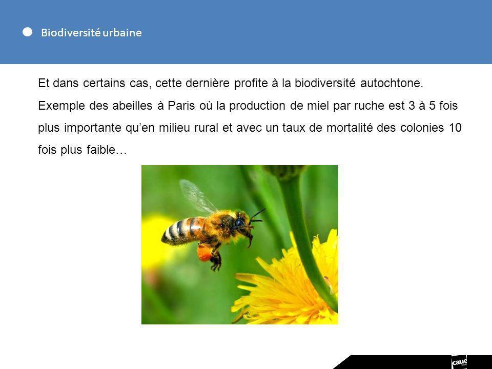 Biodiversité urbaine Et dans certains cas, cette dernière profite à la biodiversité autochtone. Exemple des abeilles à Paris où la production de miel