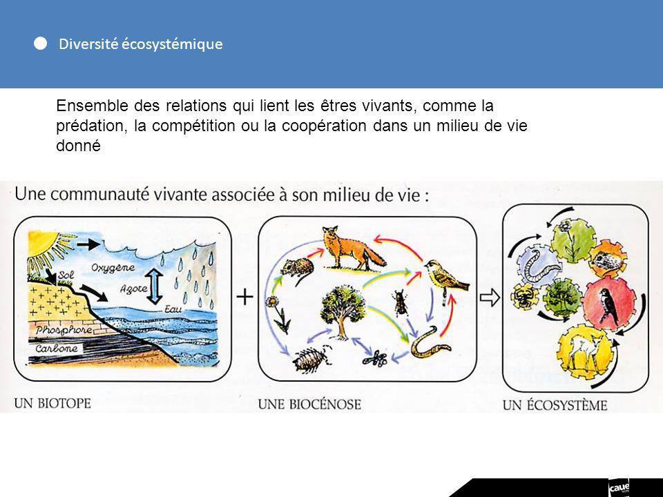 Services écologiques Le bien-être et le lien social - Les espaces récréatifs, de détente, de jardinage - la pédagogie