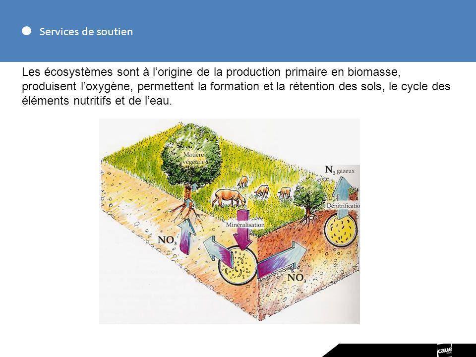 Services de soutien Les écosystèmes sont à lorigine de la production primaire en biomasse, produisent loxygène, permettent la formation et la rétentio