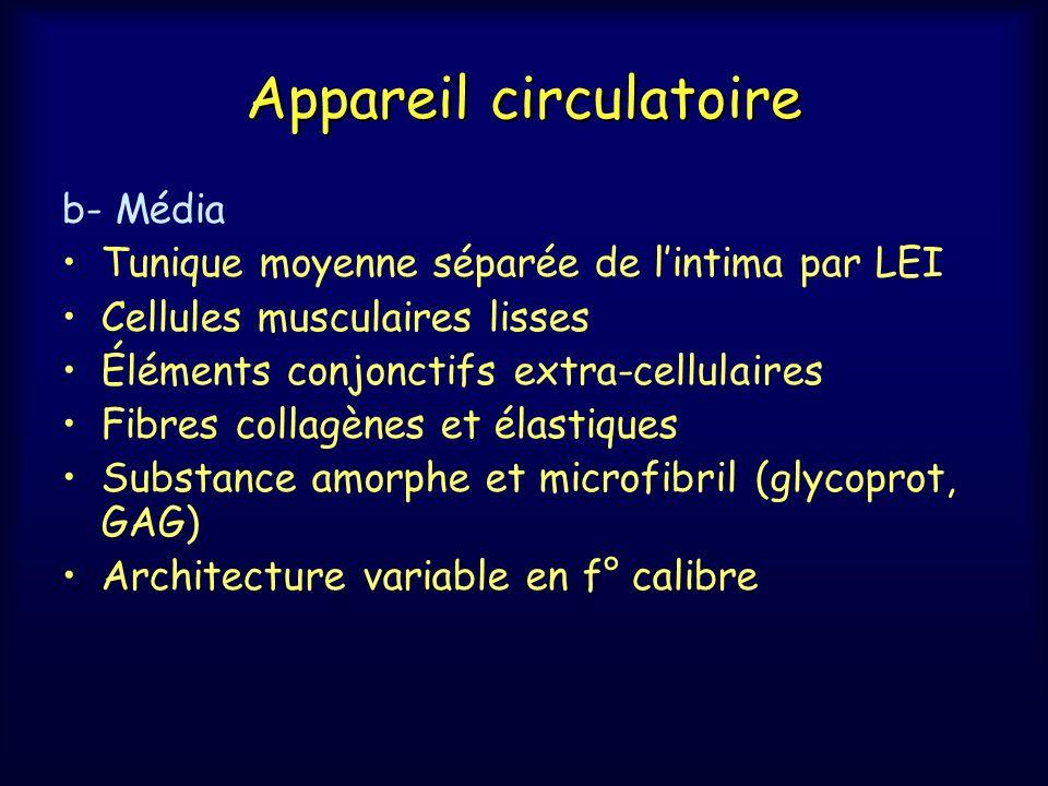 Appareil circulatoire b- Média Tunique moyenne séparée de lintima par LEI Cellules musculaires lisses Éléments conjonctifs extra-cellulaires Fibres co