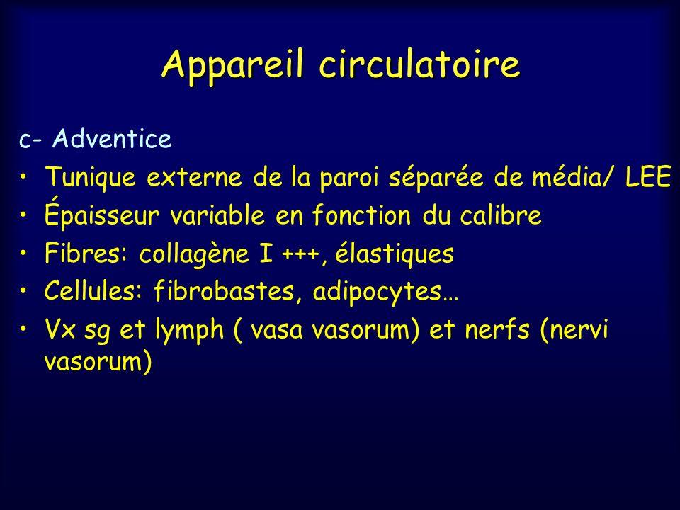 Appareil circulatoire c- Adventice Tunique externe de la paroi séparée de média/ LEE Épaisseur variable en fonction du calibre Fibres: collagène I +++