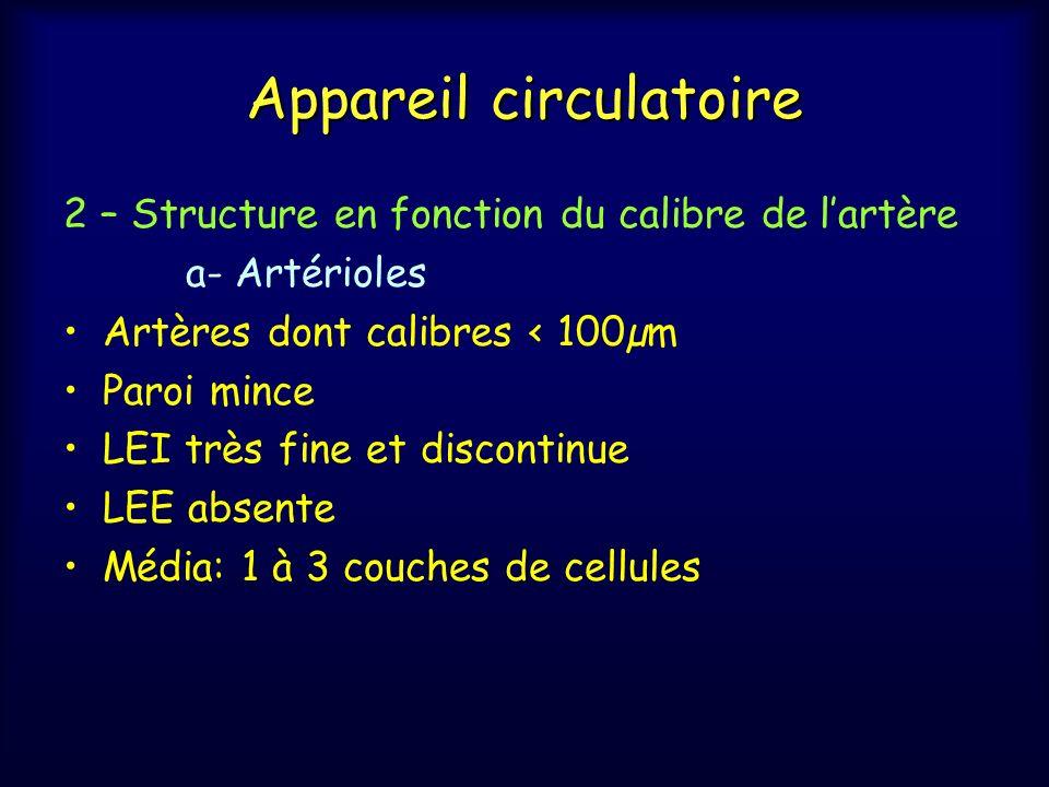 Appareil circulatoire 2 – Structure en fonction du calibre de lartère a- Artérioles Artères dont calibres < 100µm Paroi mince LEI très fine et discont