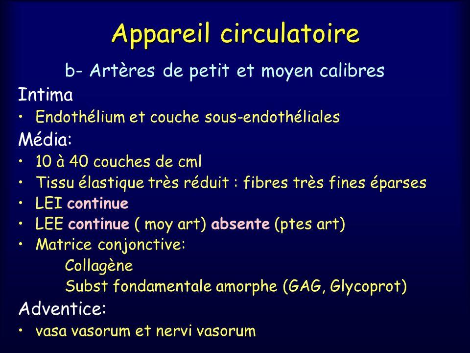 Appareil circulatoire b- Artères de petit et moyen calibres Intima Endothélium et couche sous-endothéliales Média: 10 à 40 couches de cml Tissu élasti