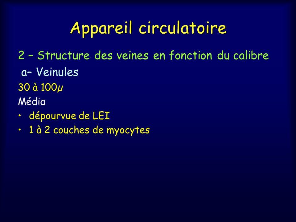 Appareil circulatoire 2 – Structure des veines en fonction du calibre a– Veinules 30 à 100µ Média dépourvue de LEI 1 à 2 couches de myocytes
