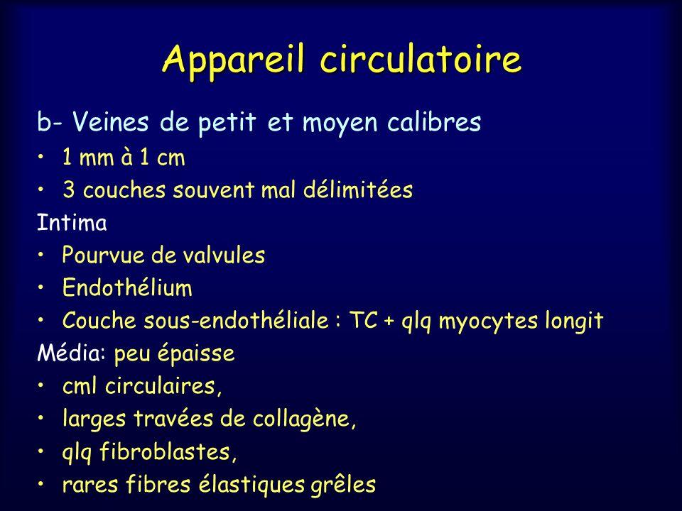 Appareil circulatoire b- Veines de petit et moyen calibres 1 mm à 1 cm 3 couches souvent mal délimitées Intima Pourvue de valvules Endothélium Couche