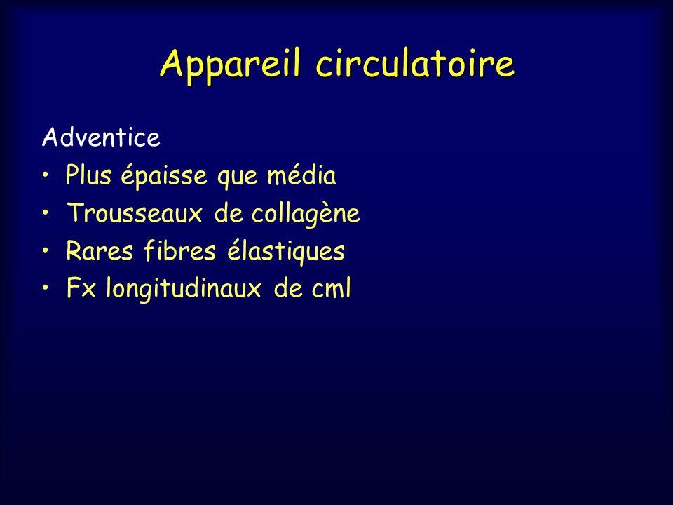 Appareil circulatoire Adventice Plus épaisse que média Trousseaux de collagène Rares fibres élastiques Fx longitudinaux de cml