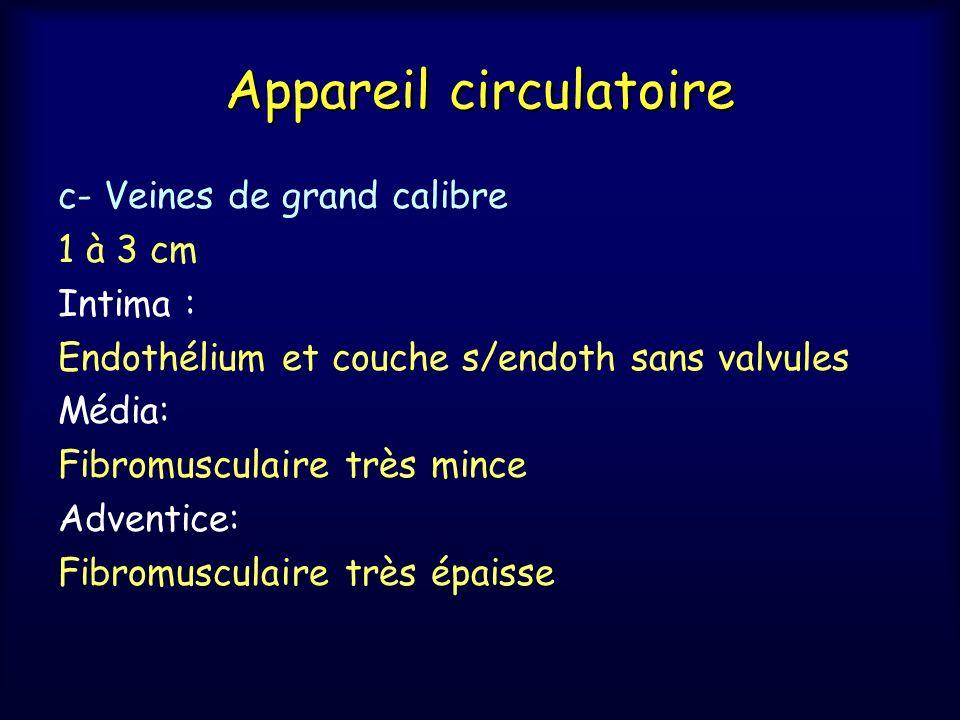 Appareil circulatoire c- Veines de grand calibre 1 à 3 cm Intima : Endothélium et couche s/endoth sans valvules Média: Fibromusculaire très mince Adve