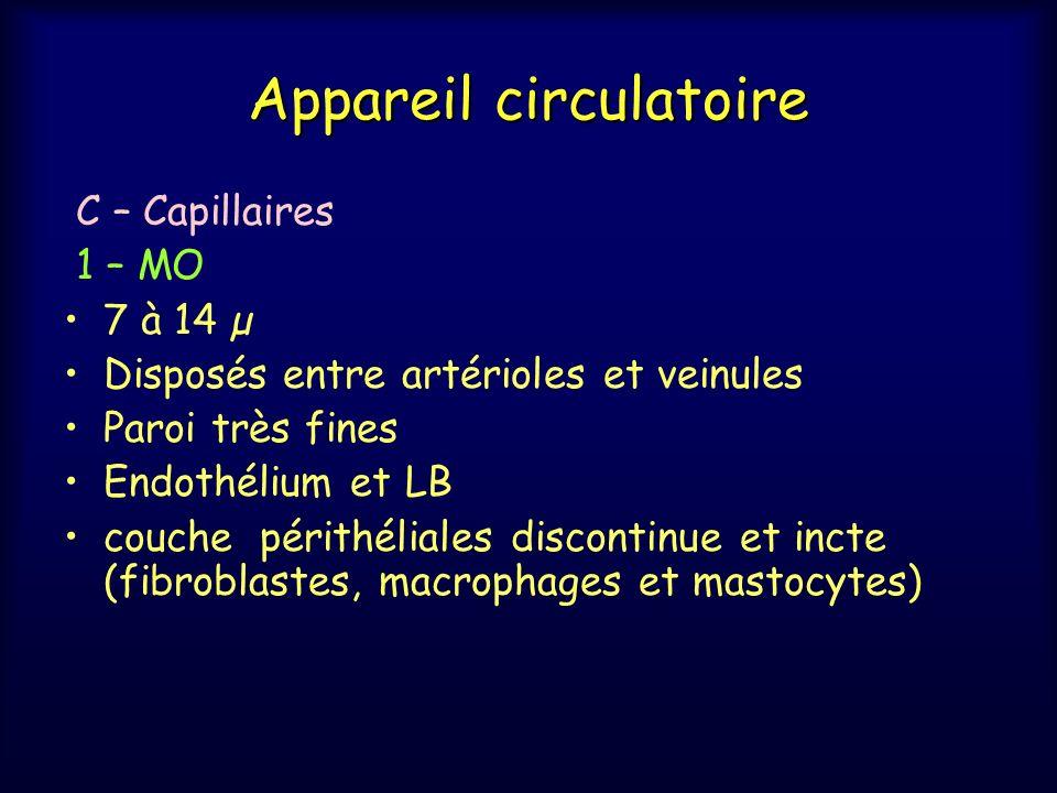 Appareil circulatoire C – Capillaires 1 – MO 7 à 14 µ Disposés entre artérioles et veinules Paroi très fines Endothélium et LB couche périthéliales di